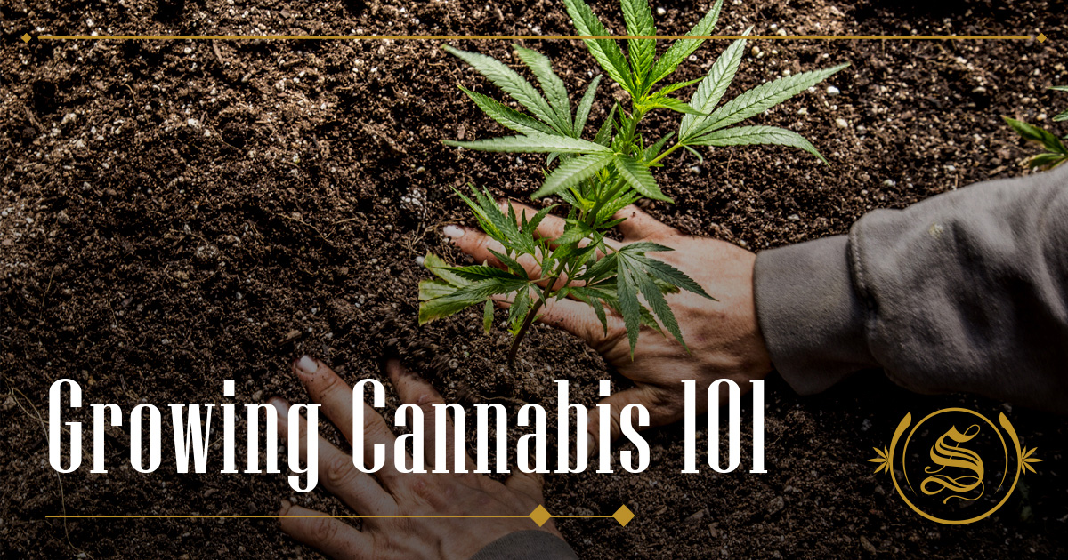Growing Cannabis 101