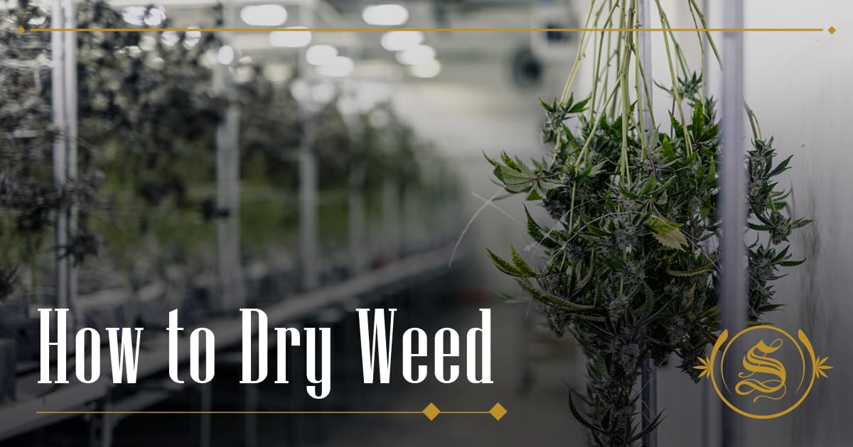 How to Dry Weed