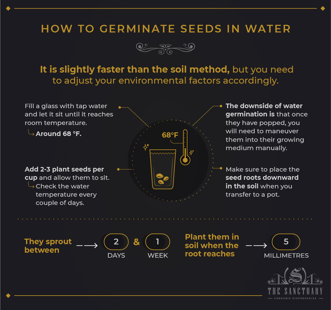 How to germinate seeds in water