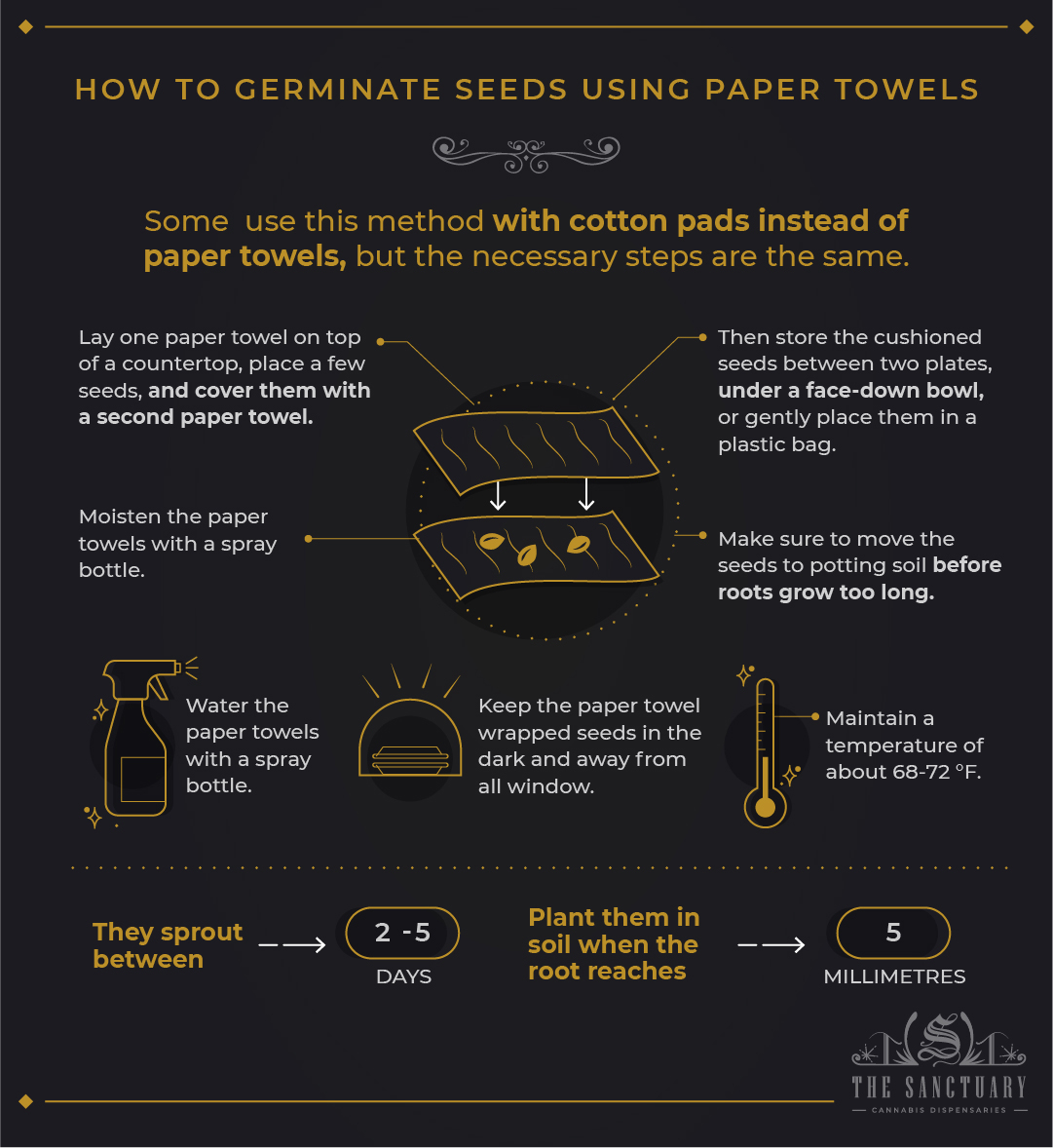 How to germinate seeds using paper towels