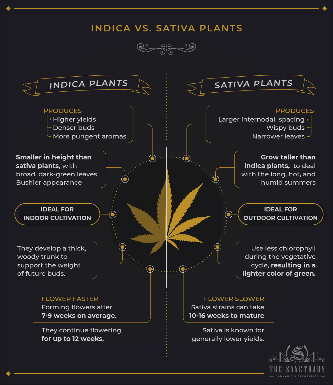 Indica vs. Sativa plants