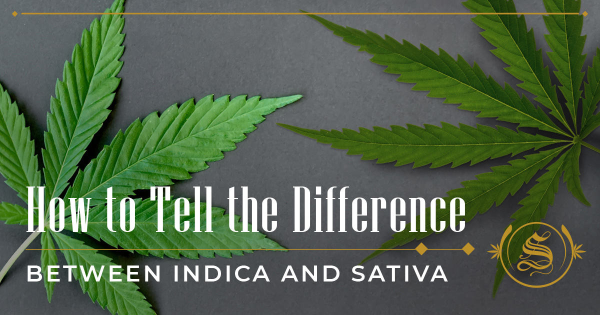 How to Tell the Difference Between Indica and Sativa