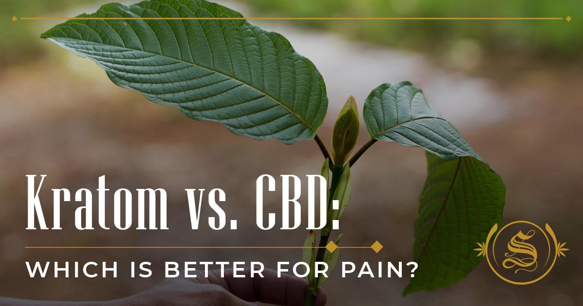 Kratom vs. CBD: Which Is Better for Pain?
