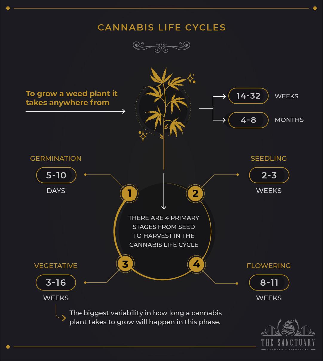Cannabis life cycles