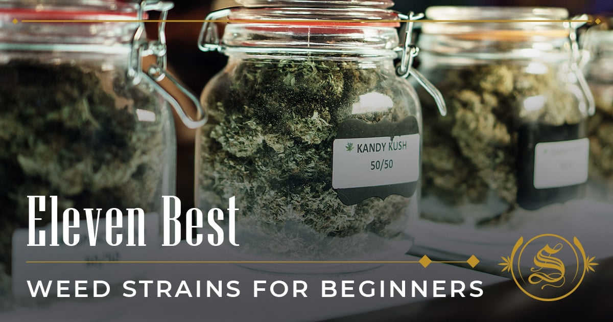 Best Weed Strains for Beginners